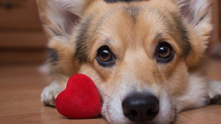 犬が『愛してる♡』とあなたに伝えている時の仕草5選