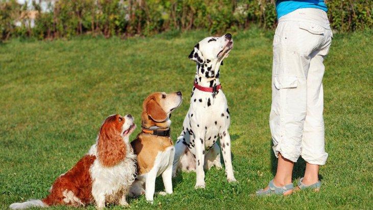 犬のトレーニングの時に正しい名前で呼ぶことが大切な理由