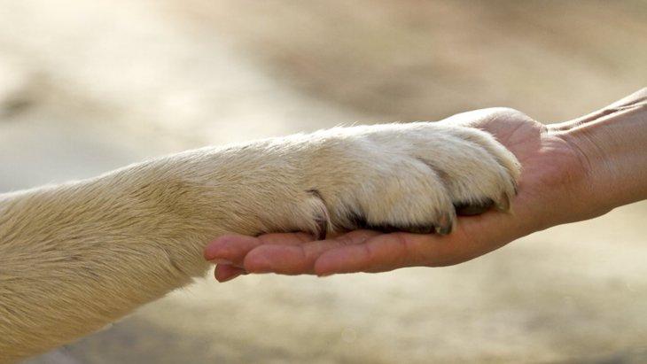 犬が『信頼している人』にだけする行動や態度4選