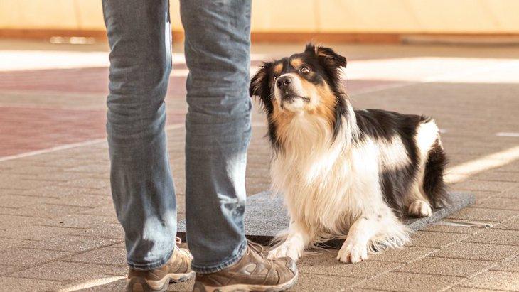 犬がしつけを完全に覚えてくれない理由4つ!どうすれば、完全に覚えてくれる?