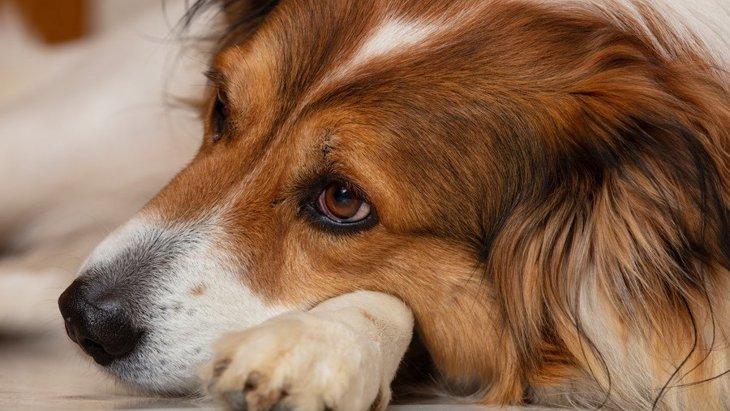 愛犬の最期にあなたがするべき5つのこと