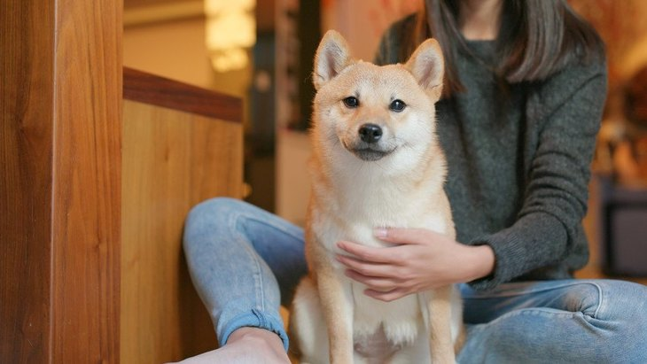 室内犬の種類の人気ランキング10選!飼い方や飼育に必要なもの、ニオイ対策とは
