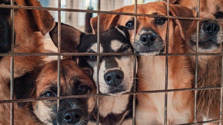 犬の『多頭崩壊』が起きてしまう理由3選!やるべき対策とは?