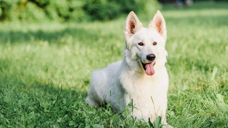 【あるある】大型犬の飼い主がよく経験する4つのこと