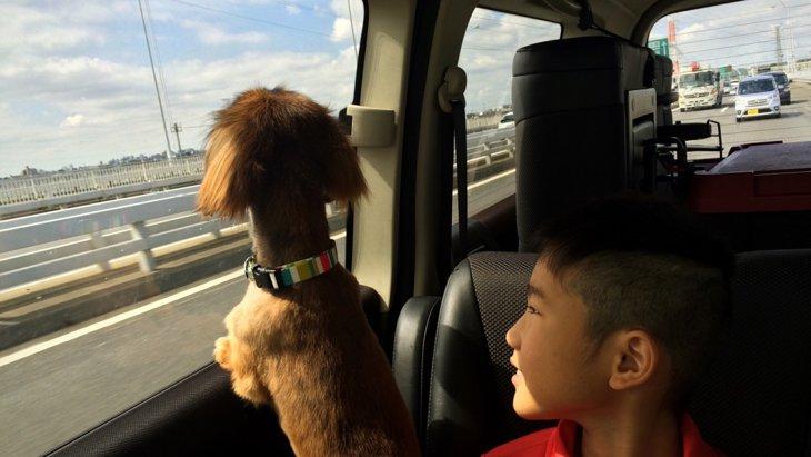 飼い主さんと愛犬が一緒に楽しめるイベント!!「ペット博2016」