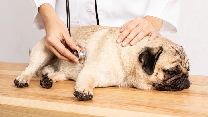 犬に『腹水』が溜まる原因3選!見逃しNGの症状と適切な対処法