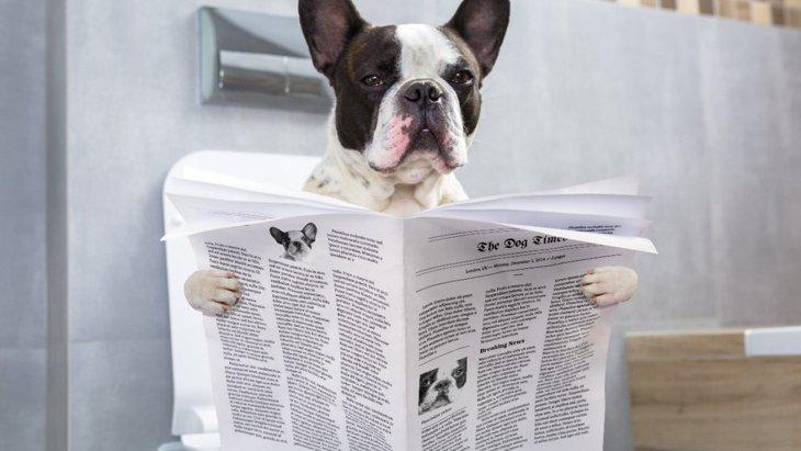 犬が飼い主のトイレについてくる時の心理4選