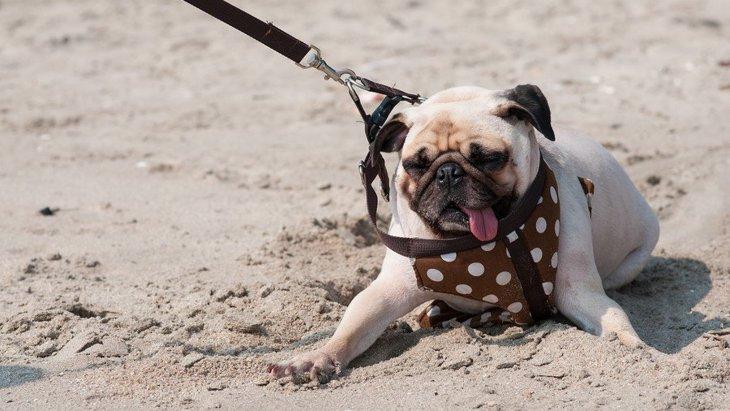 犬が散歩に行くのを拒否する時の理由2つ