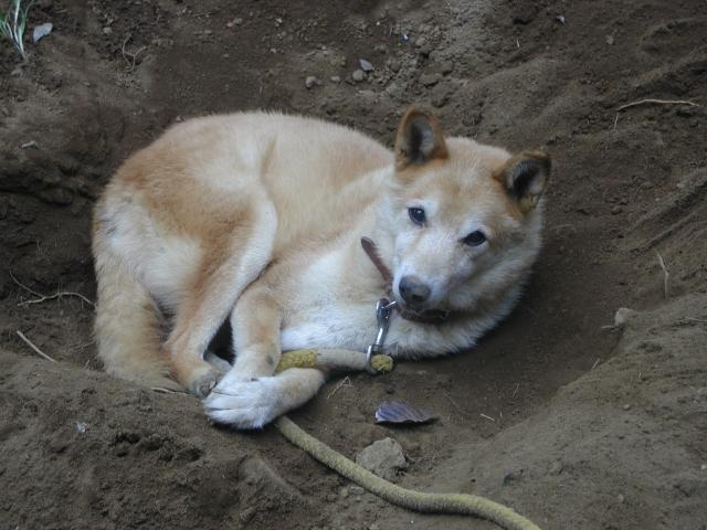 捨て犬の十戒を知っていますか