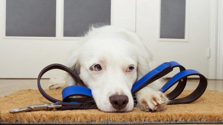 考えてあげよう!犬が悲しくなってしまう飼い主の行為4選