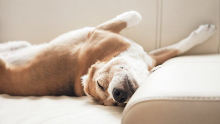 犬のいびきがうるさい時に考えられる原因と対処法