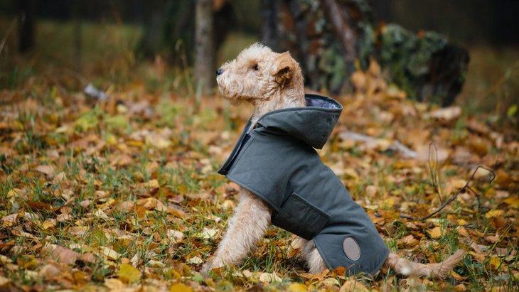 雨の日のお散歩で役立つグッズ6選