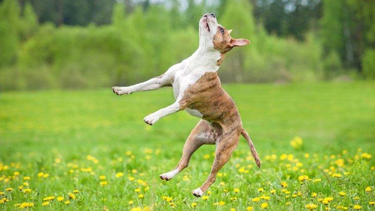 『運動神経が良くない犬』の特徴4つ!あなたの愛犬も当てはまるかも?