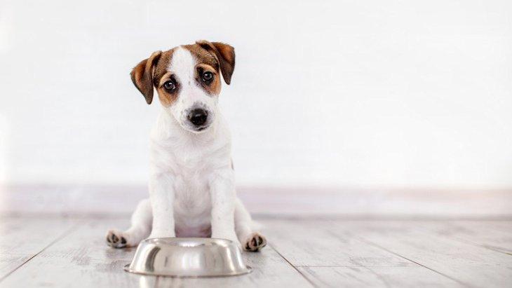 ちょっと心配…。犬が常にご飯を欲しがる理由