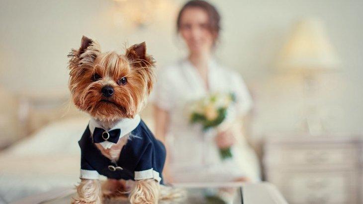 「犬を飼うと結婚できない」これって本当?