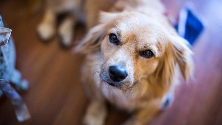 犬が天井などをジッと見つめている理由とは?何が見えてるの?