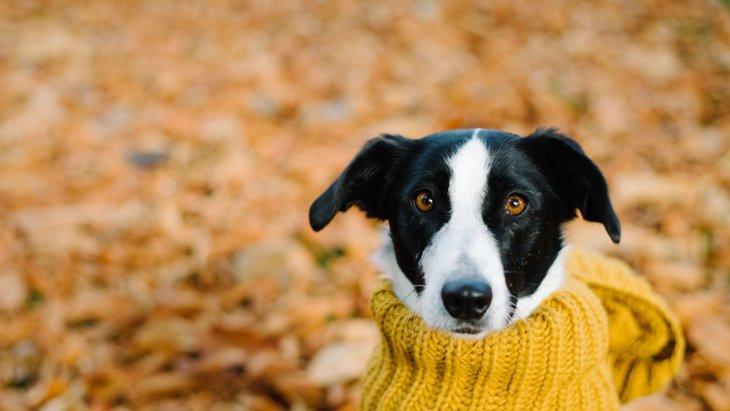 犬も季節の変わり目は体調を崩しやすい!やりたい予防と対策