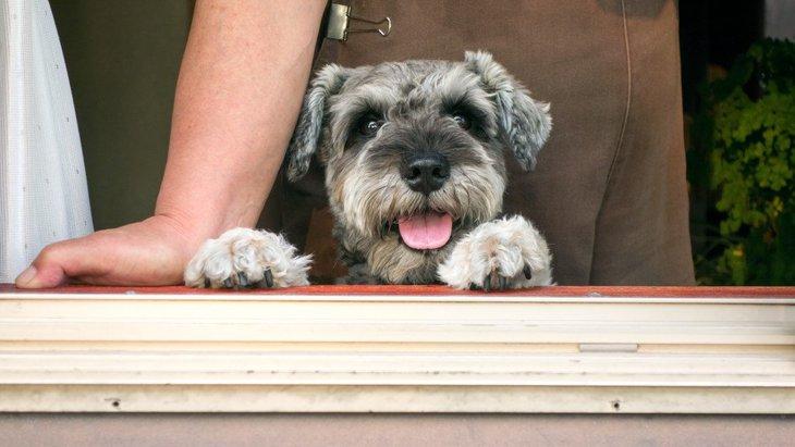 犬との適度な距離感を保つ必要性とポイント