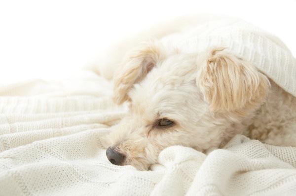 犬の心不全について 症状や原因、治療と予防法