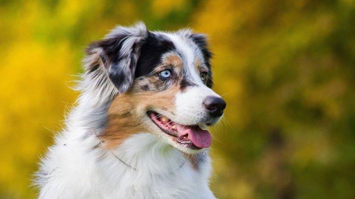 瞳が綺麗すぎる♡『目が青い犬種』3選