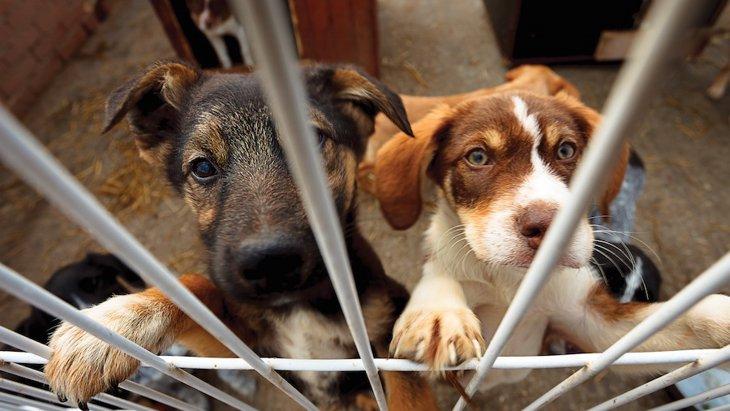 保護施設にいる犬にだって「遊ぶ時間」が必要です!