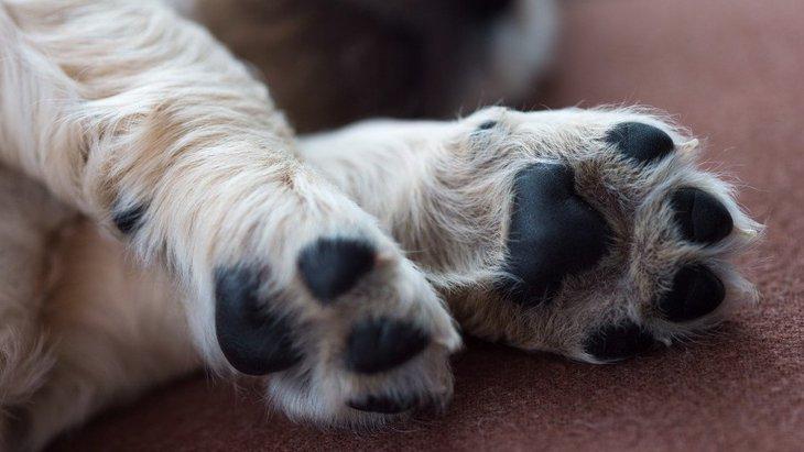 犬のお散歩の後、足を毎回洗ってあげるべき?正しい肉球のケアや注意点を解説