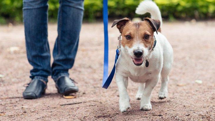 犬の散歩をしてはいけない『NGタイミング』3選