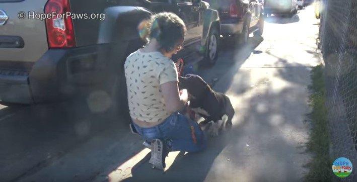 誰かが迎えに来るのを待っていたよう。保護した犬は人との暮らしに慣れていた