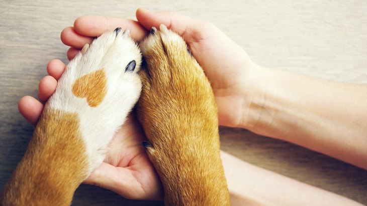 犬が足の痛みを訴えている時の仕草や行動6つ