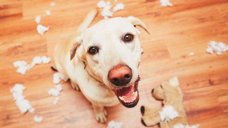 犬のドヤ顔画像15連発!おもしろかわいいワンコの表情