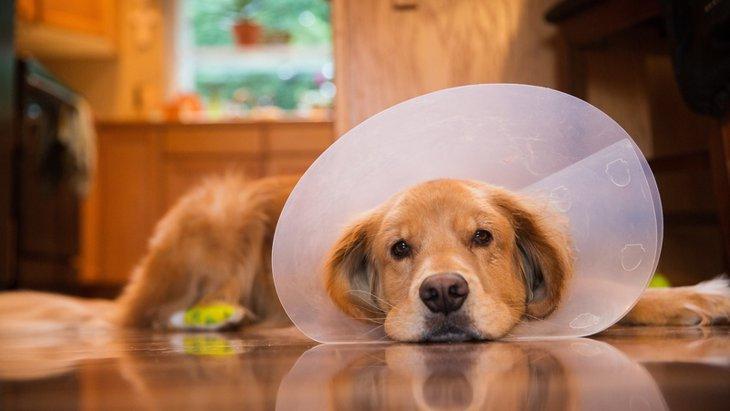 犬の避妊手術後の対応や注意点について