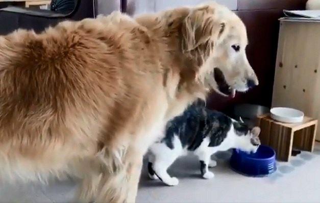 【爆笑】大型犬VS猫のバトル勃発かとおもいきや「水飲みたい!」