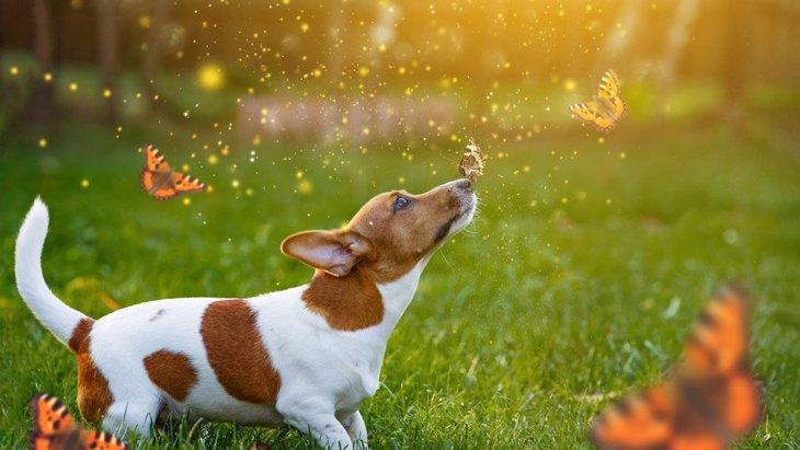 虫が多い時期に大活躍!『犬用虫除け』の作り方