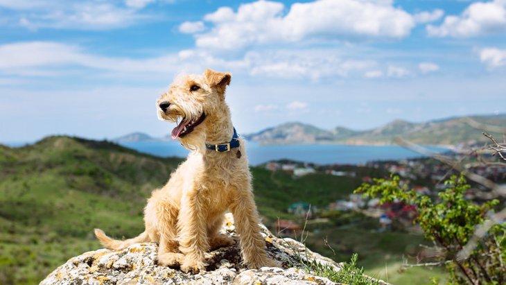 犬を登山に連れて行くときに考えたい3つの危険性