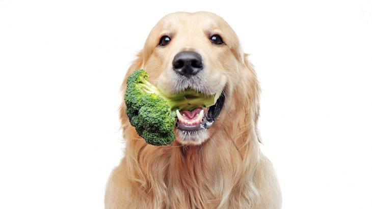 犬はブロッコリーを食べても大丈夫です!ただし与え方に注意が必要