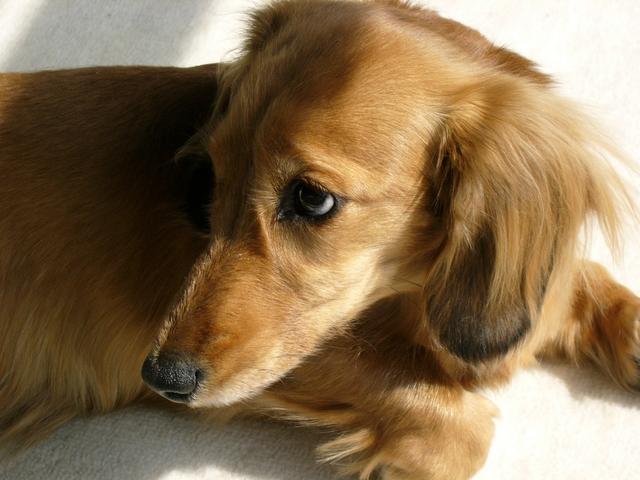 愛犬が預けられるときに感じるストレスについて