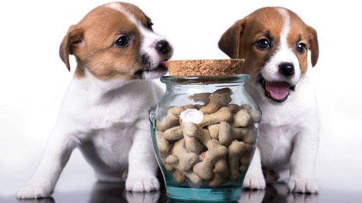 「ピュリナ プロプラン」ってなに?成犬用のおすすめドッグフード