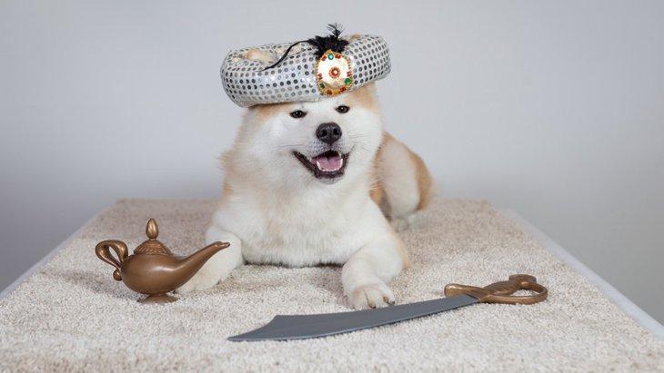 可愛すぎる♡Disneyキャラクターの仮装をした犬たち