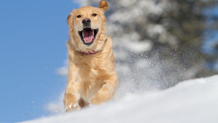 寒さに強い犬種とその特徴