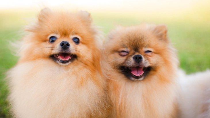 小型犬の平均寿命はどのくらい?長生きするための秘訣とは