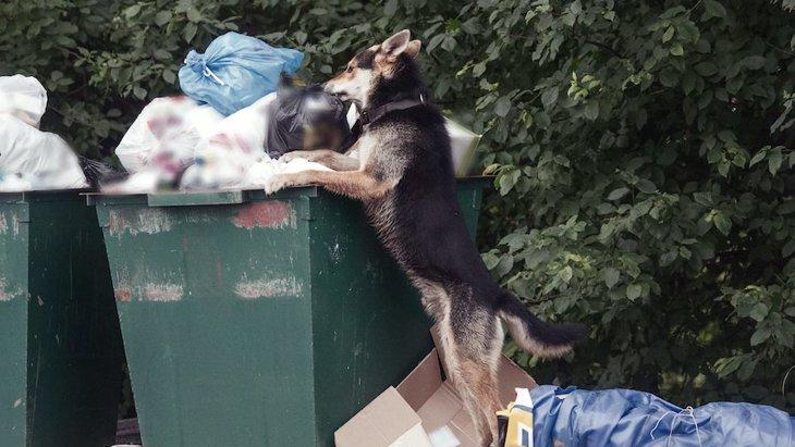 なぜ犬はゴミ漁りが好きなの?4つの理由