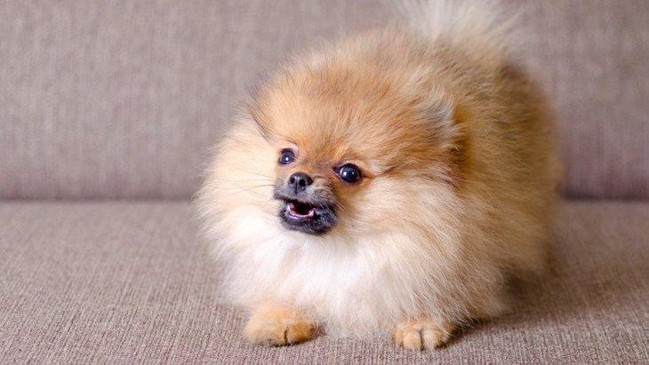 『内弁慶な犬』がよくする仕草や行動5つ