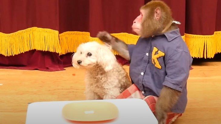 「え…うそ…?」一つしかないオヤツに戸惑うワンちゃんとお猿さん