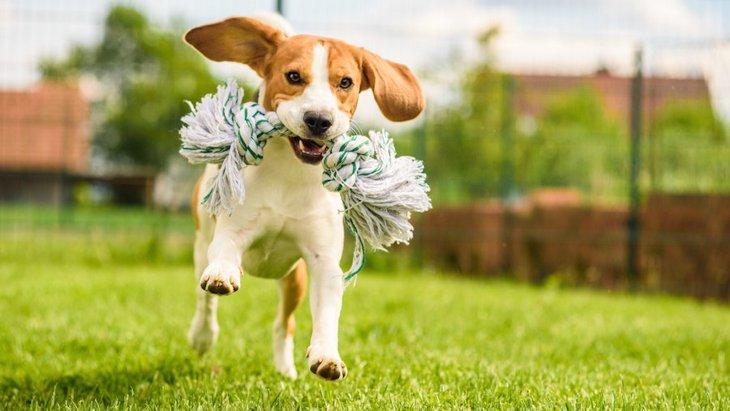 犬が喜ぶお出かけ場所を選ぶコツと注意点