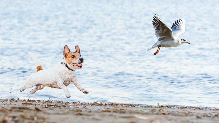 オフリードの犬は野鳥にとってどれほどの脅威かという研究結果