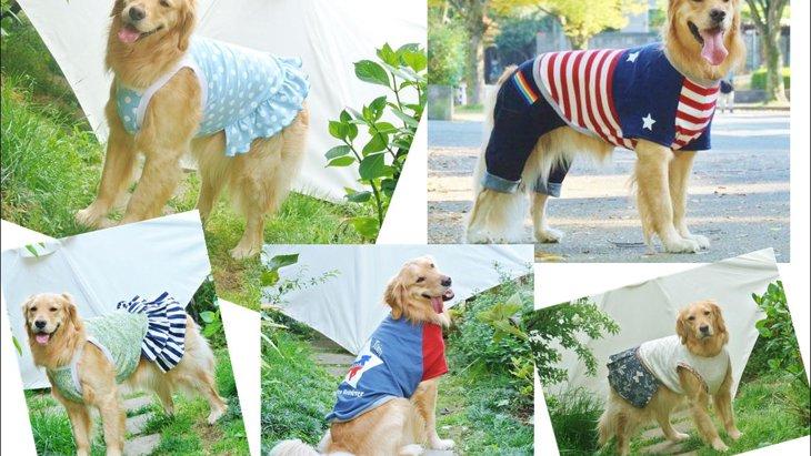 お台場で「愛犬と旅」をテーマにしたイベントが初開催!