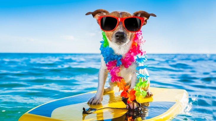 犬と一緒にハワイに行く為に必要なこと