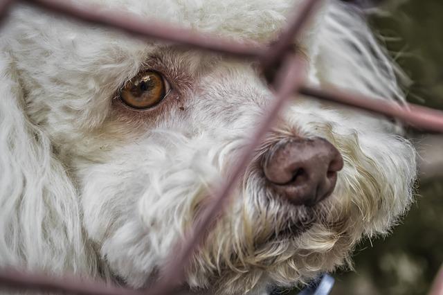 捨て犬の里親になる条件。保護犬たちを救おう!
