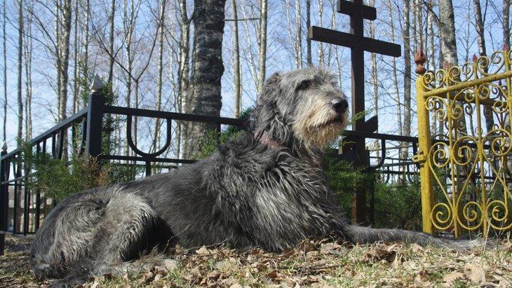 犬は『人の死』を理解している?飼い主が亡くなったら悲しむの?