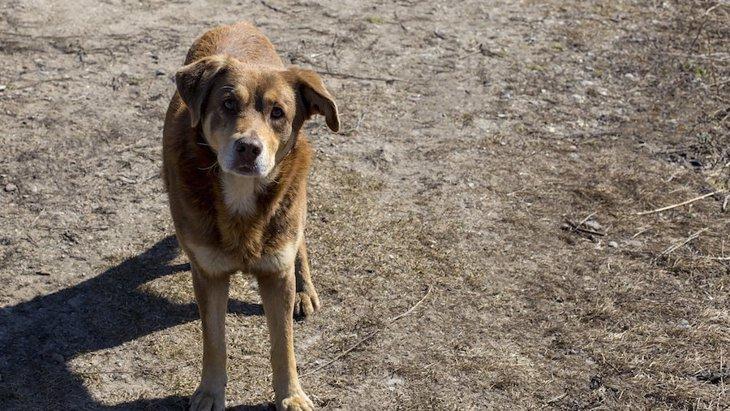 日本でも気をつけたい、野犬が持っている病原体の研究